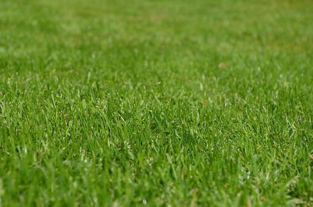upravený trávník