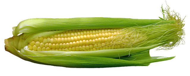 kukuřice s listy