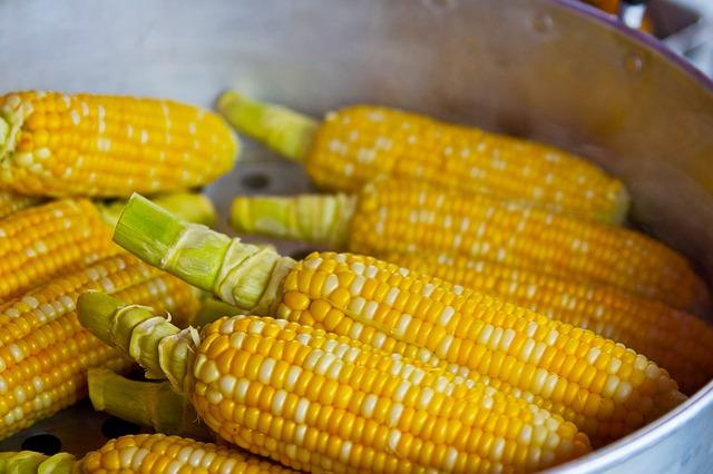 kukuřice v kastolu