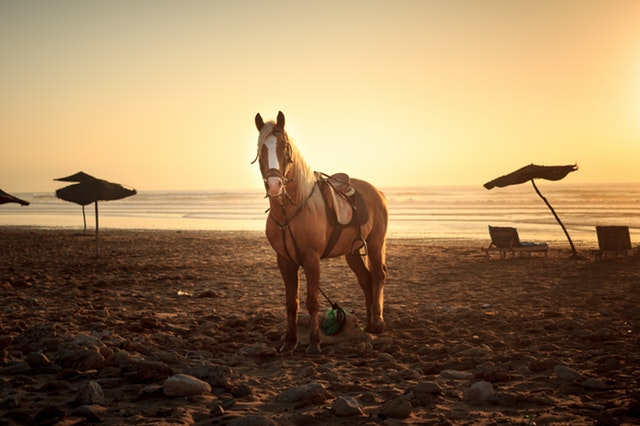 koník na pláži